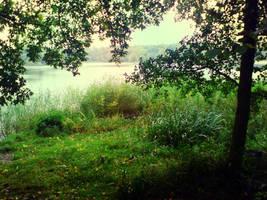Forrest by Harpyen