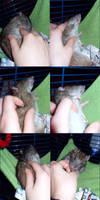 Cute rat by Harpyen