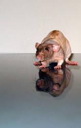 Rat Reflection 3 by Harpyen