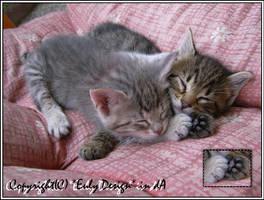 Micia e Tigro by EulyDesign