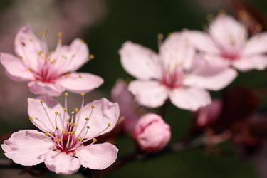 Springtime by xMkx