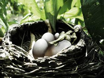 Das etwas andere Vogelnest by danielederosa