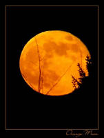 Orange Moon by PhilipCapet