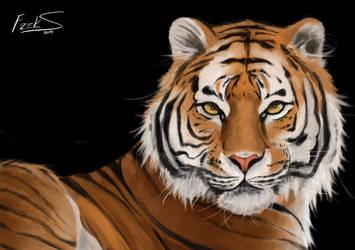 Tiger by Freksama