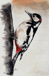 Greater Spotted Woodpecker by camillo1978