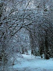 Winter Wonderland 1 by camillo1978