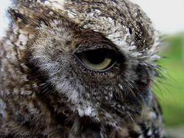 Owl 2 by RexTull