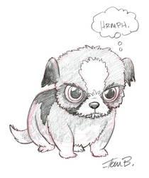 Grumpy Shih Tzu by tombancroft