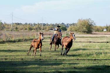 Catch Them Horses by Belvarius