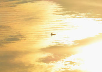 Morning Flight by Belvarius