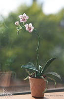 Miniature Orchid by Kospero