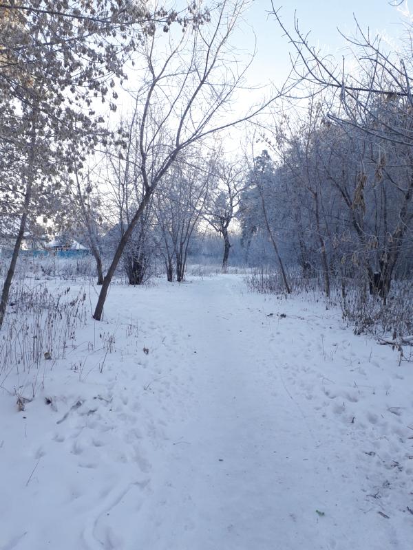 Frosty morning [7] by KaomaTheCat