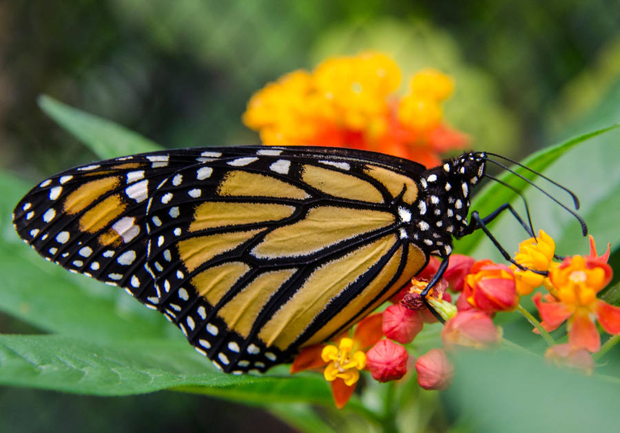 Butterfly Exposition (2) by Mocris