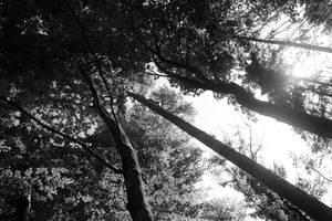 Towards Heaven by Mocris