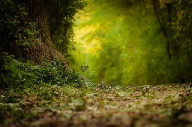 Herbst by Mocris