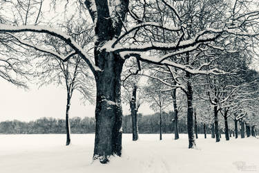 Winters Day by Mocris