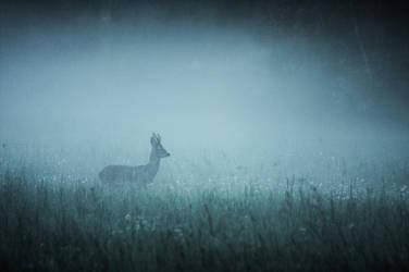 Roe deer in mist by Vladimir-Z