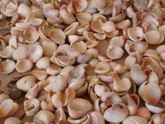 shells by Qurtii