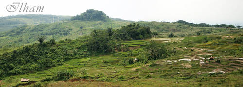 The Great Rice Field by ilhaman