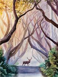 Misty Forest by evgeniabel