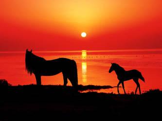 Sunset horse by NoaSelwyn