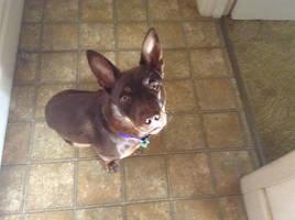 My Doge by Venus-Dragoness