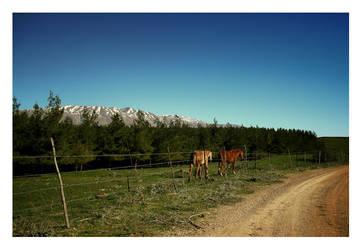 Wild Horses by moti-cohen