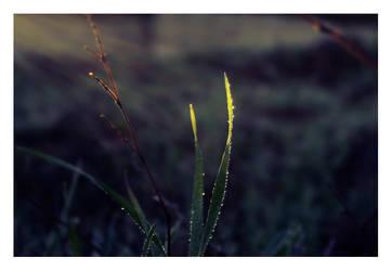 shining drops by moti-cohen
