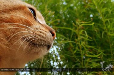 Feline Contemplation by ezuhaib