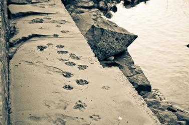 Trail by ezuhaib