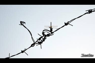 Trespassing Borders by ezuhaib