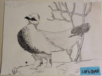Islandbird by CapnNOMN