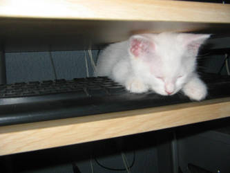 Boliche Sleeping On The Keyboard by as2000
