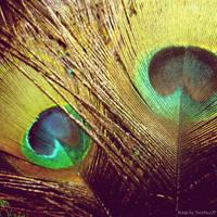 Majesty of Peacock by Iulia-Oprinesc