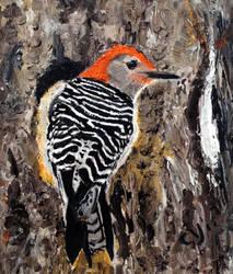 Red Bellied Woodpecker by CarolynYM