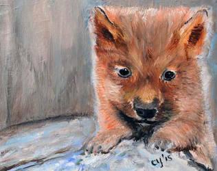 Baby Wolf by CarolynYM
