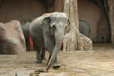 Elephant 3 by Mirk-stock