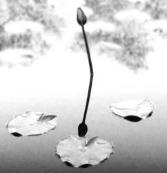 Peace by Guts-N-Effort