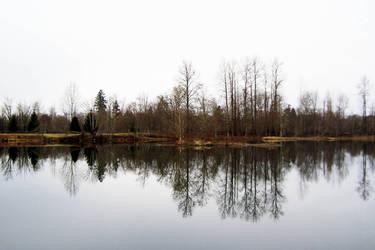 Calm in SW Washington by mysweetpea