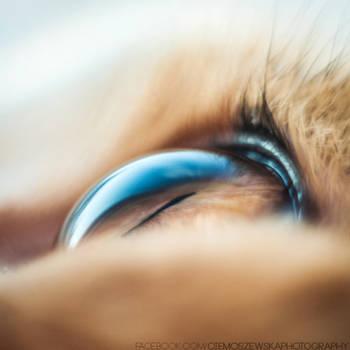 cat's eye by jestembella