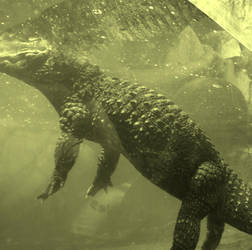 Crocodile by Logpolinochca