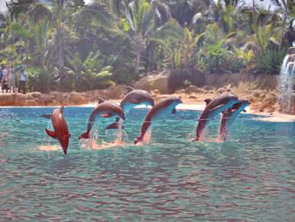 Dolphins by Logpolinochca