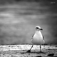 calm.. by matricaria72