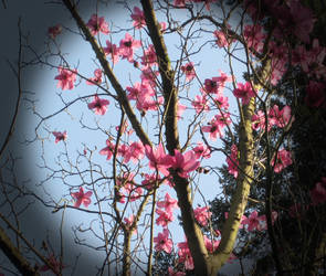 Blossom by louisekc