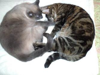 My two kittys by Netaya