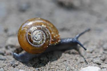 Unknown Land Snail by DeviantLadyAshley