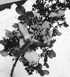 Winter Flowers by QualcNerd19