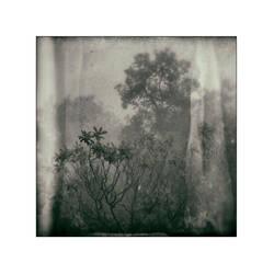 Neblina Verde by cameraflou