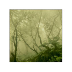 foresta lumina by cameraflou