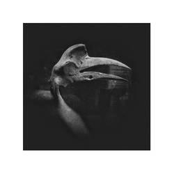 Dead Crow by cameraflou